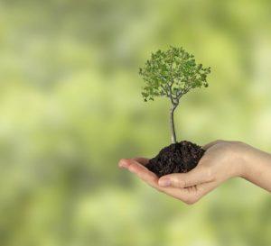 Solar Power Saves Trees